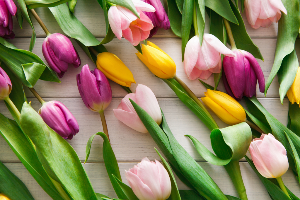 arquetipos de marca tulipán